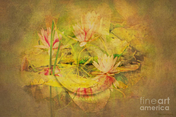 Claude Monet Photograph - Reflections Of Monet's Lilies by MaryJane Armstrong