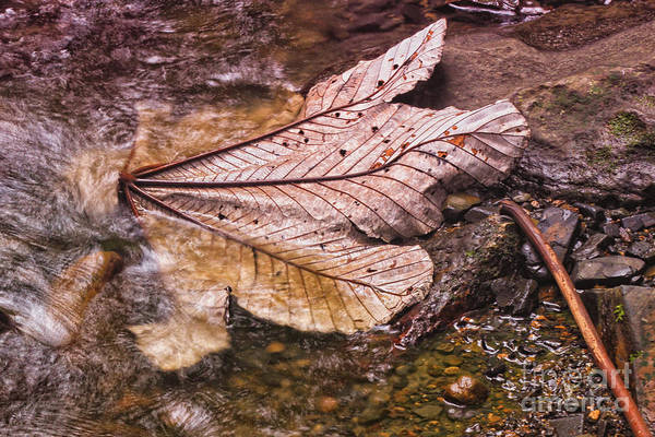 Photograph - Reflections Of Nature by Mary Lou Chmura