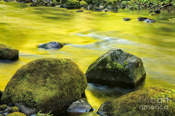 Photograph - Reflections Of Spring II by Stuart Gordon