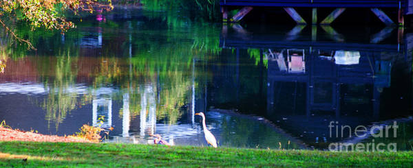 Wall Art - Photograph - Reflections Of Spring by Jinx Farmer