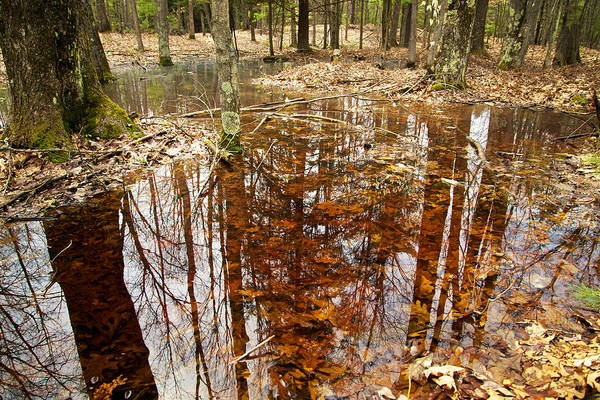 Photograph - Reflections On A Forest Floor by Mary Lee Dereske
