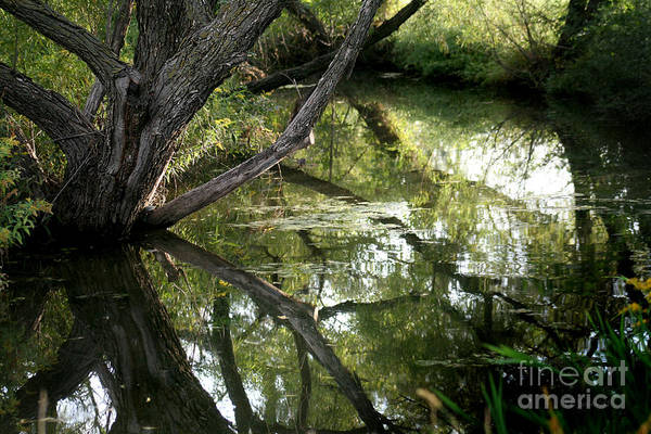 Photograph - Reflections On The Water At Dyck Arboretum by E B Schmidt