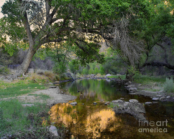 Photograph - Reflections Sabino Canyon by Jemmy Archer