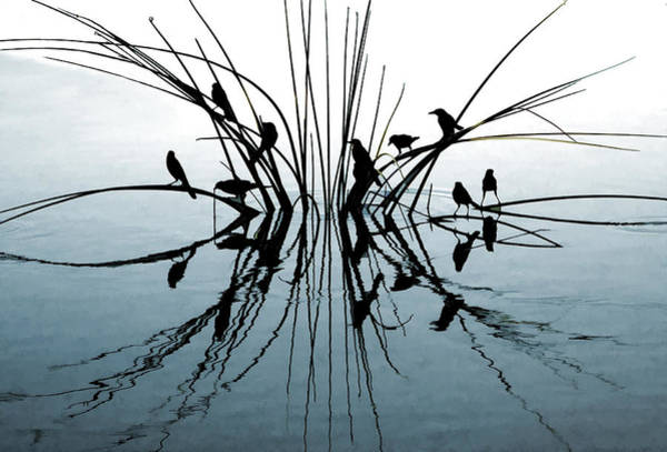 Photograph - Reflective by Pete Rems
