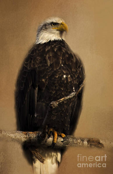 Photograph - Regal Eagle by Pam  Holdsworth