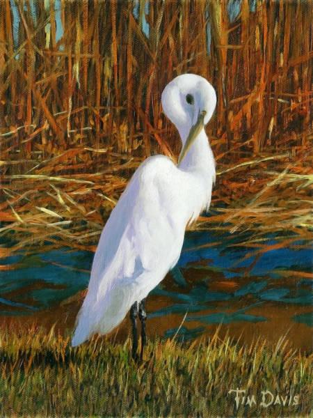 Everglades Painting - Regal White by Tim Davis