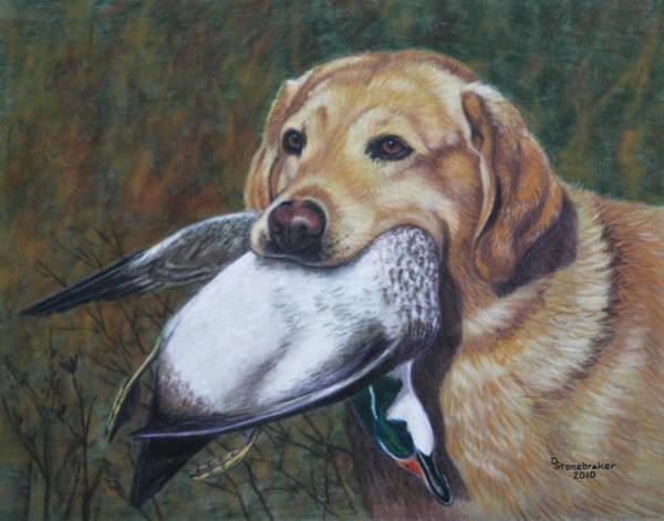 Duck Hunting Drawing - Reign Dance by Debbie Stonebraker