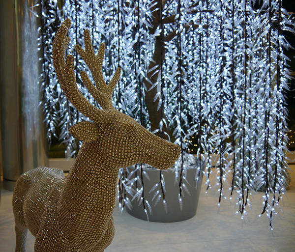 Photograph - Reindeer Bling by Richard Reeve