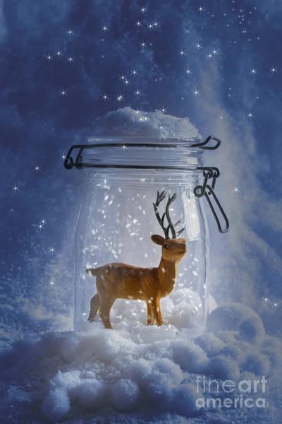 Lid Wall Art - Photograph - Reindeer Snowglobe by Amanda Elwell
