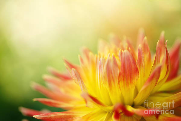 Photograph - Rejoice by Beve Brown-Clark Photography