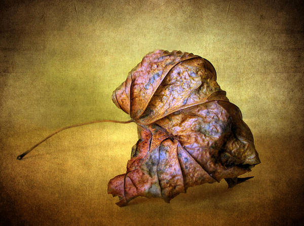 Photograph - Remains Of The Day by Jessica Jenney