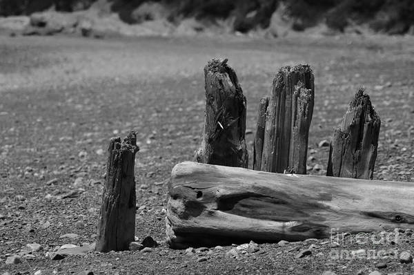 Photograph - Remains by Randi Grace Nilsberg