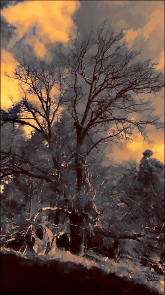 Photograph - Rembrandt's Tree by Douglas MooreZart