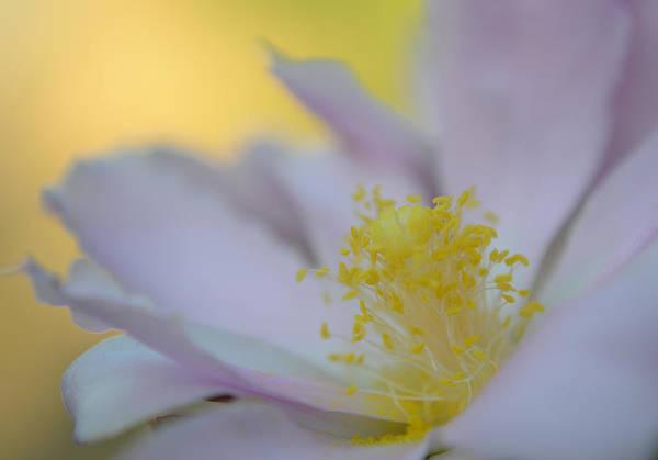Photograph - Remember This... by Melanie Moraga