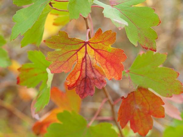 Photograph - Remembering Fall by HW Kateley