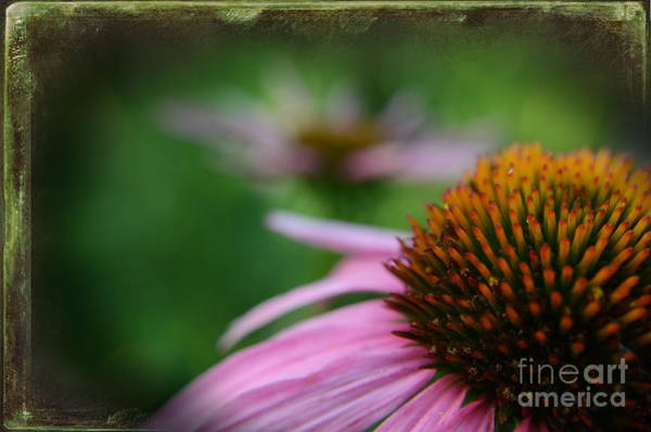 Wall Art - Photograph - Remembering Renees Garden by The Stone Age