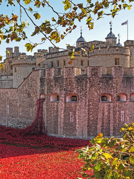 Photograph - Remembering The Fallen by Gill Billington