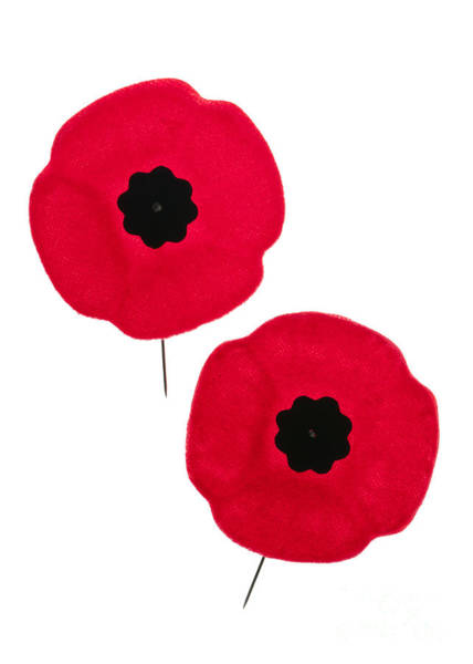 Remembrance Photograph - Remembrance Day Poppies by Elena Elisseeva