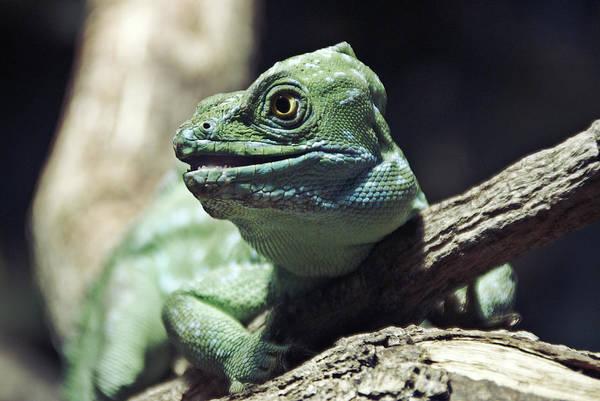 Wall Art - Photograph - Reptile by Craig Thomas