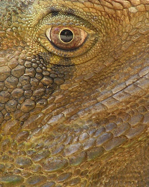Photograph - Reptile Skin Pattern by Dreamland Media