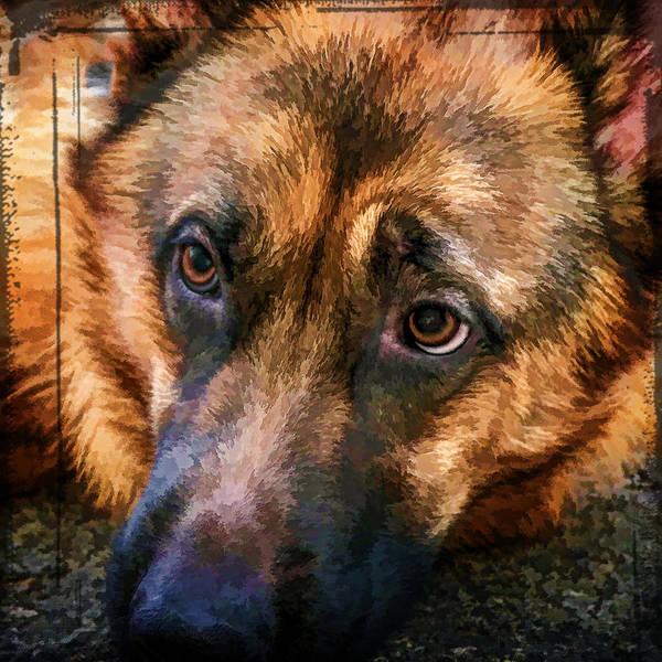 Photograph - German Shepherd Rescue Dog Portrait Squared by Eleanor Abramson