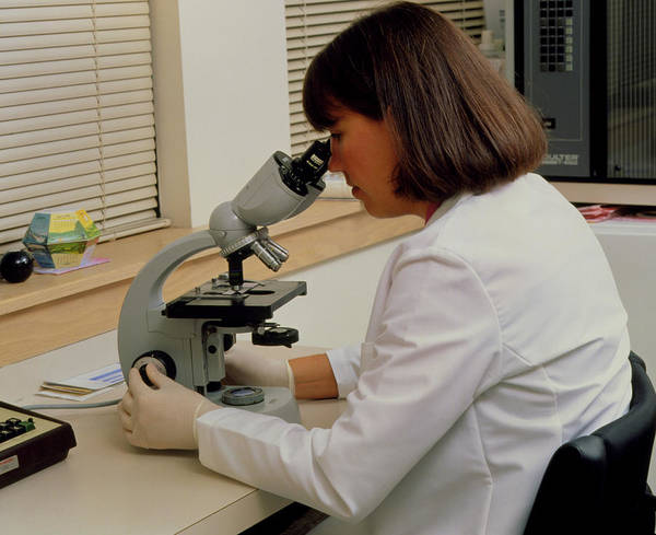 Microscope Wall Art - Photograph - Researcher Looks Into Eyepiece Of Light Microscope by Matt Meadows/science Photo Library