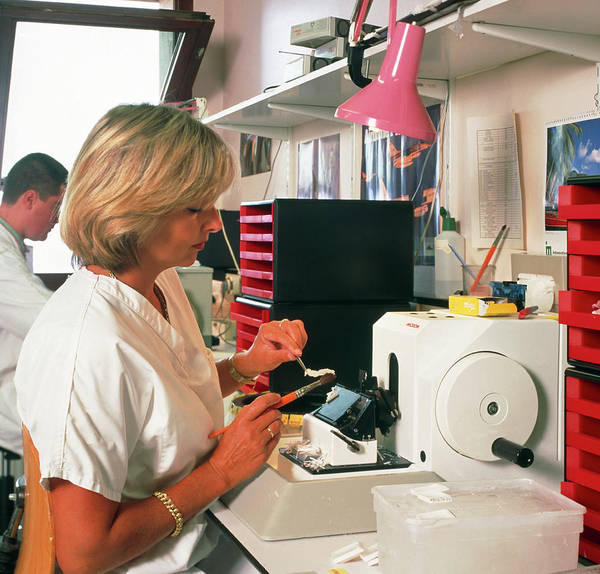 Histology Wall Art - Photograph - Researcher Uses A Microtome To Cut Tissue Samples by Cc Studio/science Photo Library