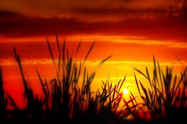 Photograph - Reservoir Sunset Tall Grass by Jim Albritton