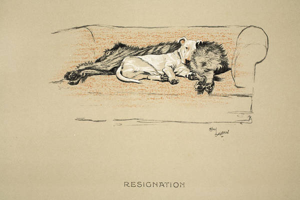 Hound Drawing - Resignation, 1930, 1st Edition by Cecil Charles Windsor Aldin