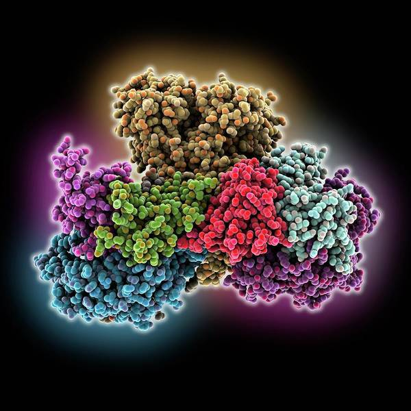 Biochemistry Photograph - Respiratory Complex I by Laguna Design