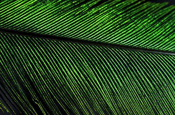 Quetzals Photograph - Resplendent Quetzal Feather Detail by Andres Morya Hinojosa