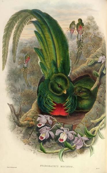 Quetzals Photograph - Resplendent Quetzals by Natural History Museum, London/science Photo Library