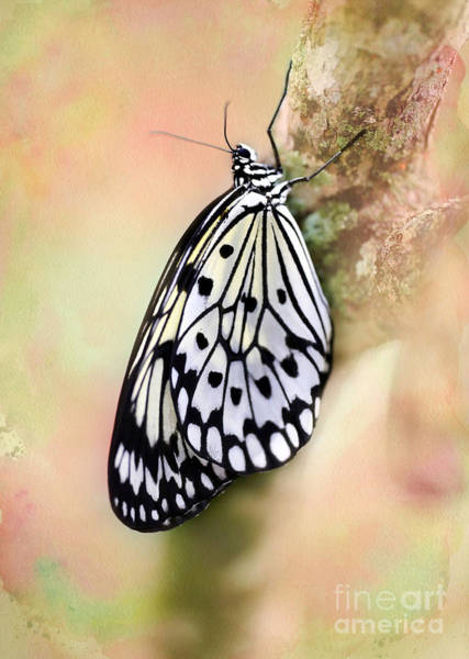 Photograph - Restful Butterfly by Sabrina L Ryan