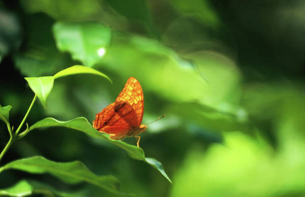 Resting Photograph - Resting Butterfly by Regis Martin