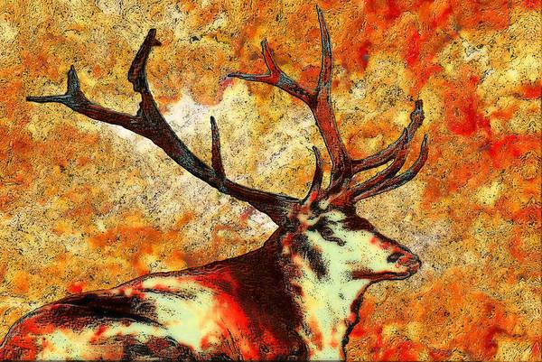 Elk Herd Photograph - Resting Elk by Jack Zulli