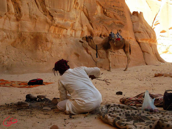 Photograph - Resting In The Desert After Long Walks by Colette V Hera  Guggenheim