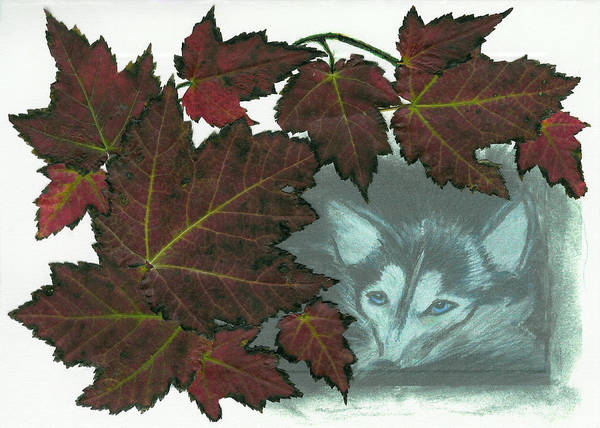 Husky Mixed Media - Resting In The Leaves by Anne Post