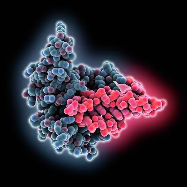 Restrictocin And Inhibitor Art Print