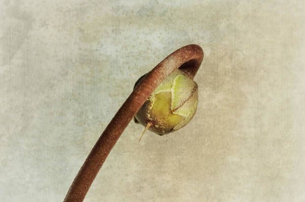 Earth Tones Photograph - Resurrection Time 2 by Susan Capuano