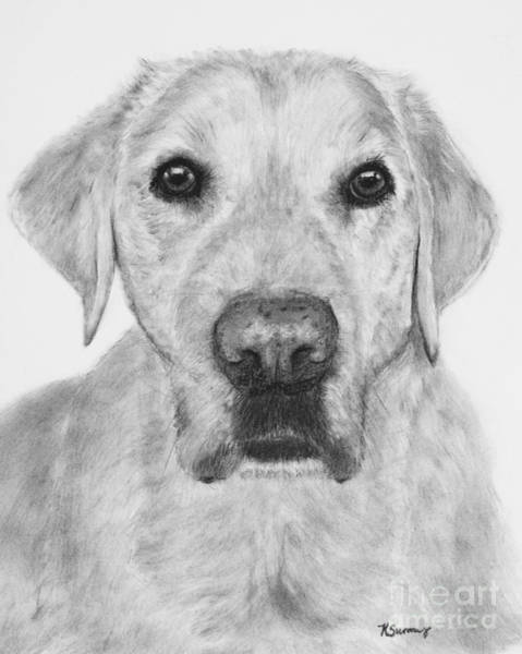 Drawing - Retriever Lab Drawing by Kate Sumners