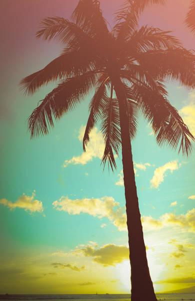 Wall Art - Photograph - Retro Styled Hawaiian Palm Tree by Mr Doomits