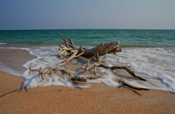 Driftwood Photograph - Returning by Betsy Knapp
