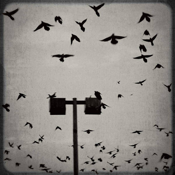 Wall Art - Photograph - Revenge Of The Birds by Trish Mistric