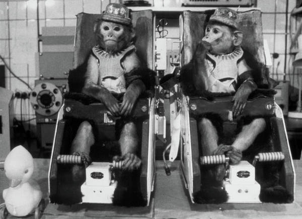 In Flight Photograph - Rhesus Monkeys Used In Soviet Space Research by Ria Novosti