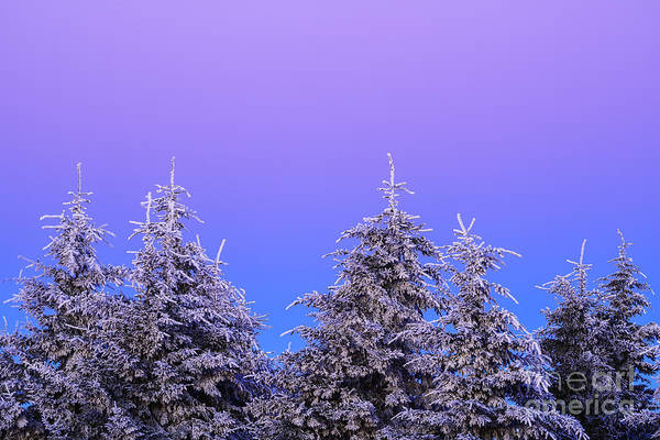 Photograph - Rhime Ice Pine Trees Sunrise by Thomas R Fletcher