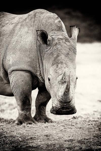 Rhinocerus Photograph - Rhino After The Rain by Mike Gaudaur