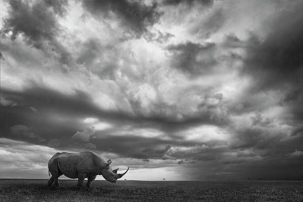 Wall Art - Photograph - Rhino Land by Mario Moreno