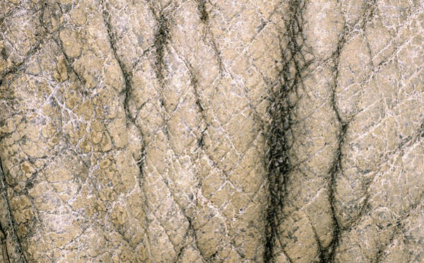 Wall Art - Photograph - Rhino Skin by Nigel Downer