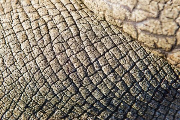 Rhinoceros Photograph - Rhinoceros Skin by Peter Chadwick