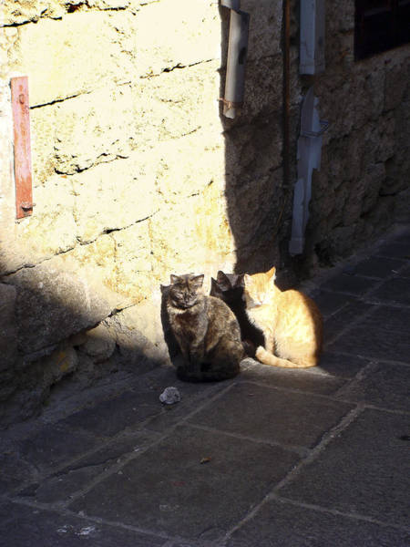 Photograph - Rhodes Cat Trio by Karen Zuk Rosenblatt